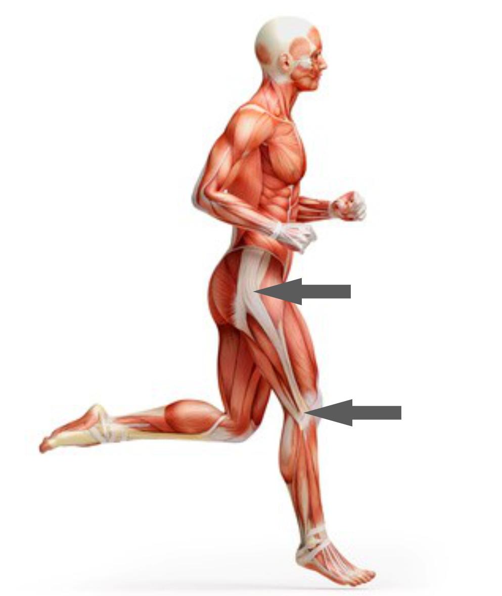 Atemberaubend Hüfte Und Unteren Rücken Anatomie Fotos - Physiologie ...